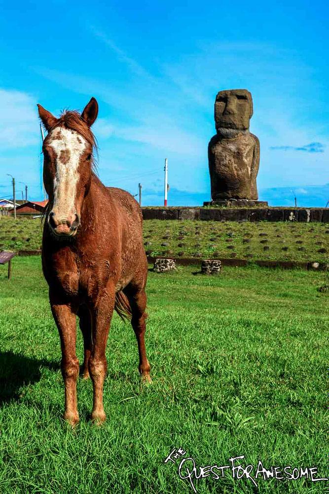 Horse and Moai on Easter Island